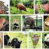 Mengenal Nama Nama Ilmiah Binatang (Fauna)