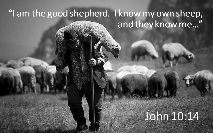 "Image result for Jesus said ""I Am the Good Shepherd"""