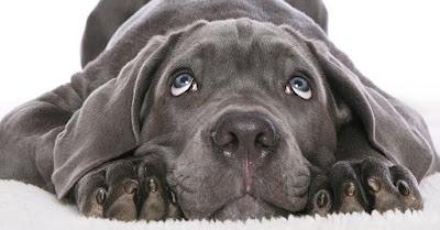 Cão chorra pela morte do seu dono