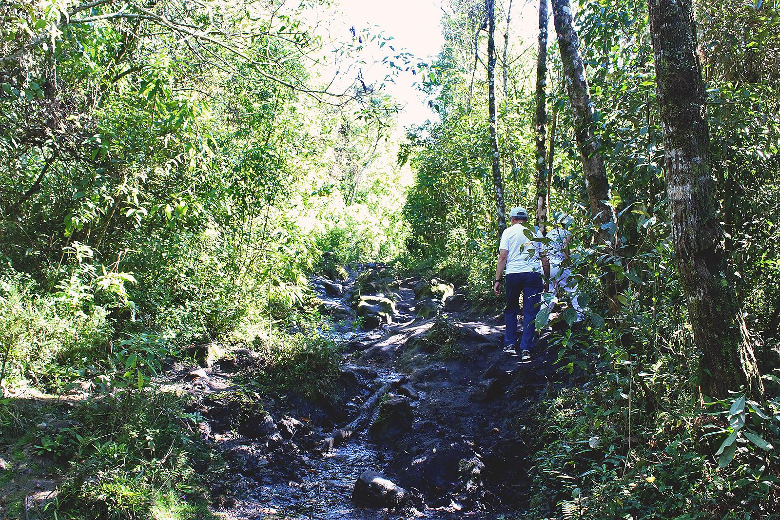 trilha mata pedras subida monte verde