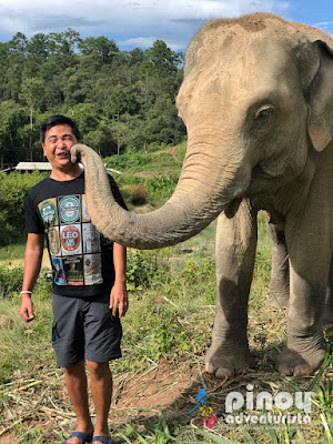 Elephants Caring, Bathing, Swim at Big Waterfall Plus Bamboo Rafting Adventure in Chiang Mai