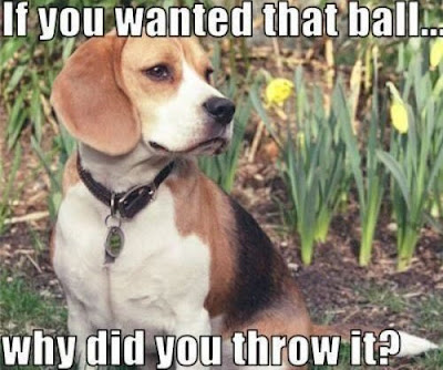 Serious Dog Asks Question - #petfancy #dogs #petstagram #instadog #petsagram #doglover #dogs_of_instagram