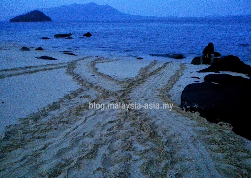 Talang Island Turtle Conservation