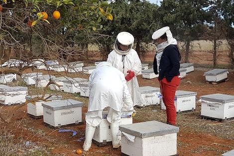 """تربية النحل تنقل """"نساء الشرق"""" من البيوت إلى العمل في الحقول"""