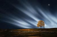 albero giorno figlio uomo ritorno signore cieli luce