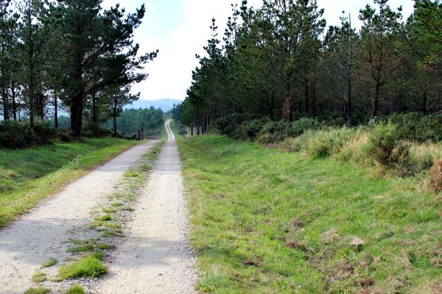 foto bosque en el camino