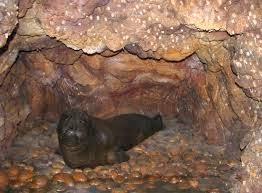 Se esconde en cuevas