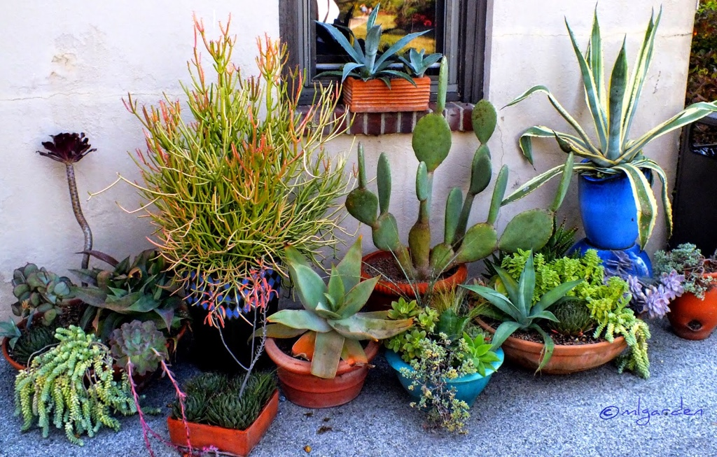 Garden Design Ideas: Sucessful Succulent Gardening on
