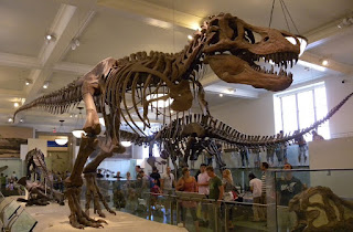 Esqueleto del T-Rex en el Museo de Historia Natural