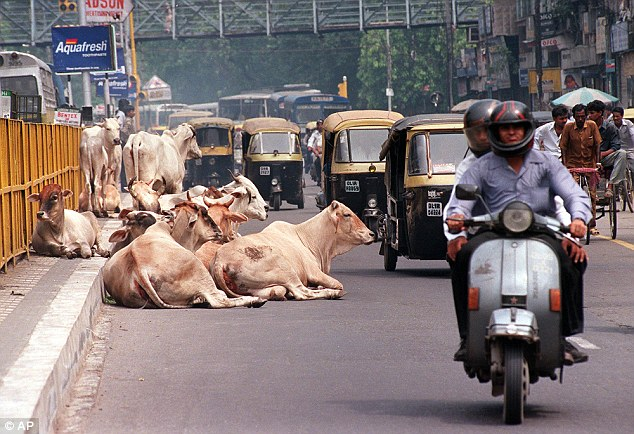 Cows to get ID cards in India