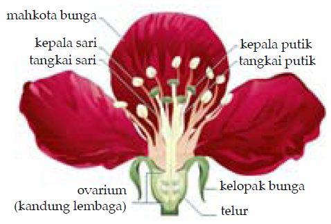 Morfologi dan Bagian bagian Bunga Beserta Fungsinya Lengkap