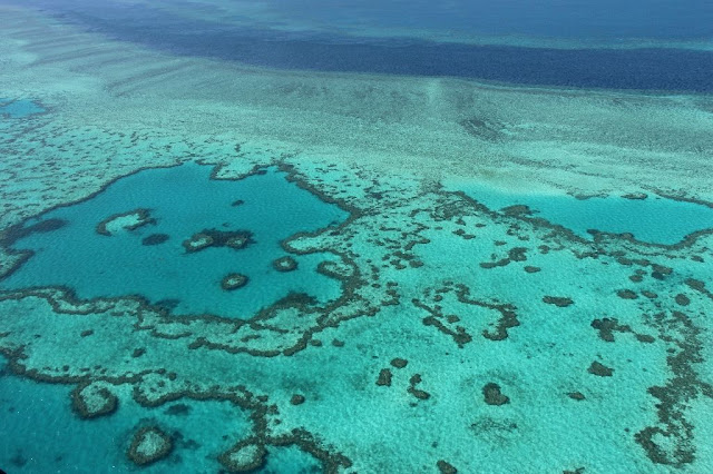 Scientists send coral reef plea to Australia