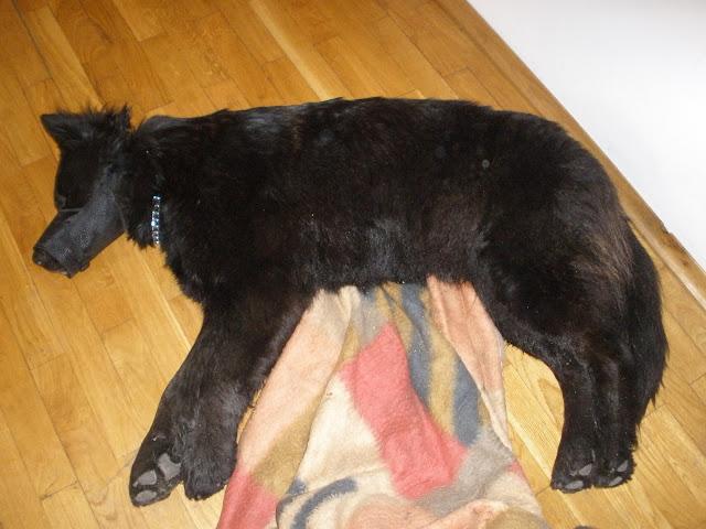 znaleziono psa, uratowano psa, zaginiony pies,