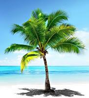 Turkuaz renkli bir denizin kenarındaki kumsalda büyümüş tek bir palmiye ağacı