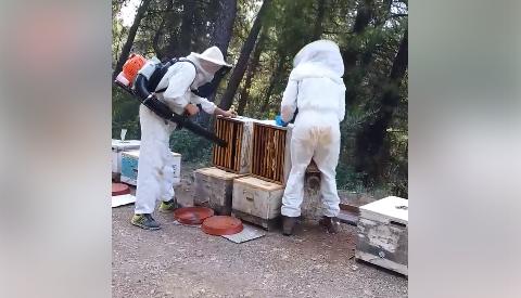 Μελισσοκομία Αγρινίου: Τρύγος στα πεύκα video