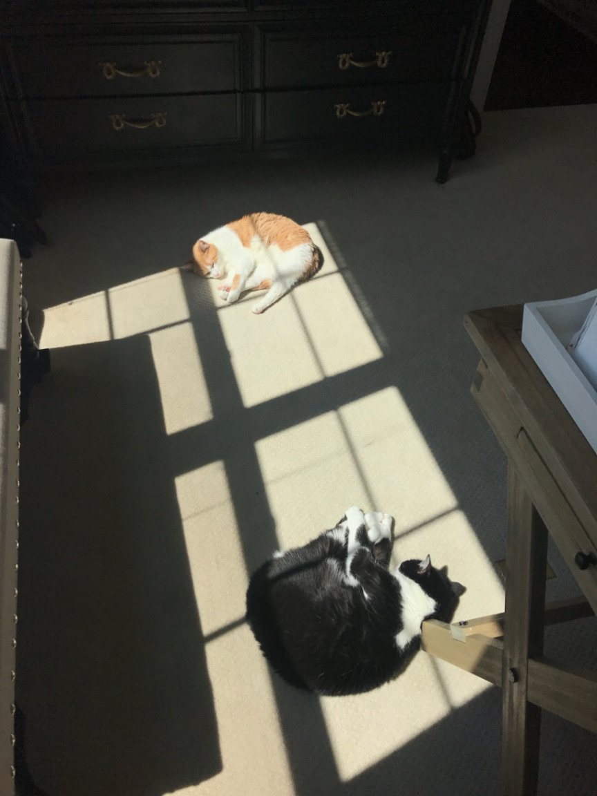 Best products for cat owners