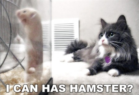 I Can Has Hamster?, funny cat meme