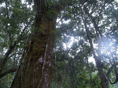 hutan lebat,kenjuran,gunung prau