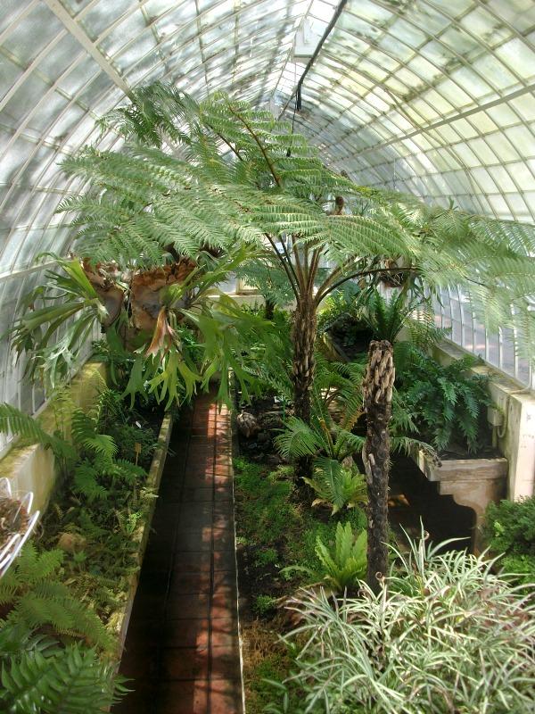 Un paseo por el jard n bot nico de valencia guia de jardin - Jardin botanico valencia ...