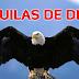 Las Aguilas, las favoritas de Dios