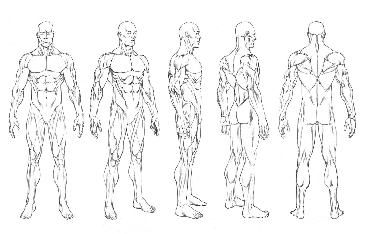 Human Male Body Drawing
