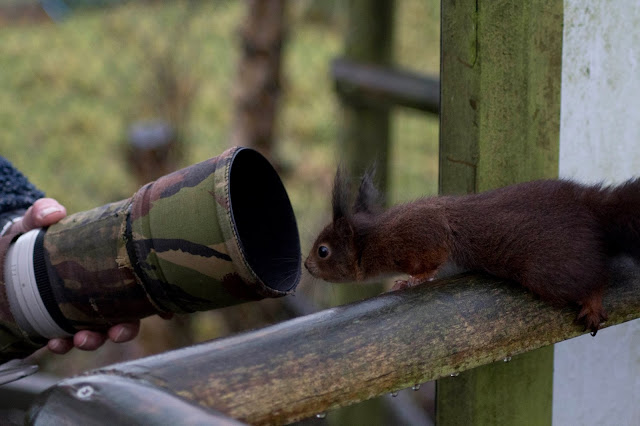Funny curious squirrel joke picture