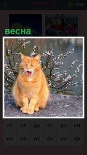 на земле около водоема сидит кошка и мяукает весной