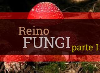 reino fungi resumo características gerais classificação