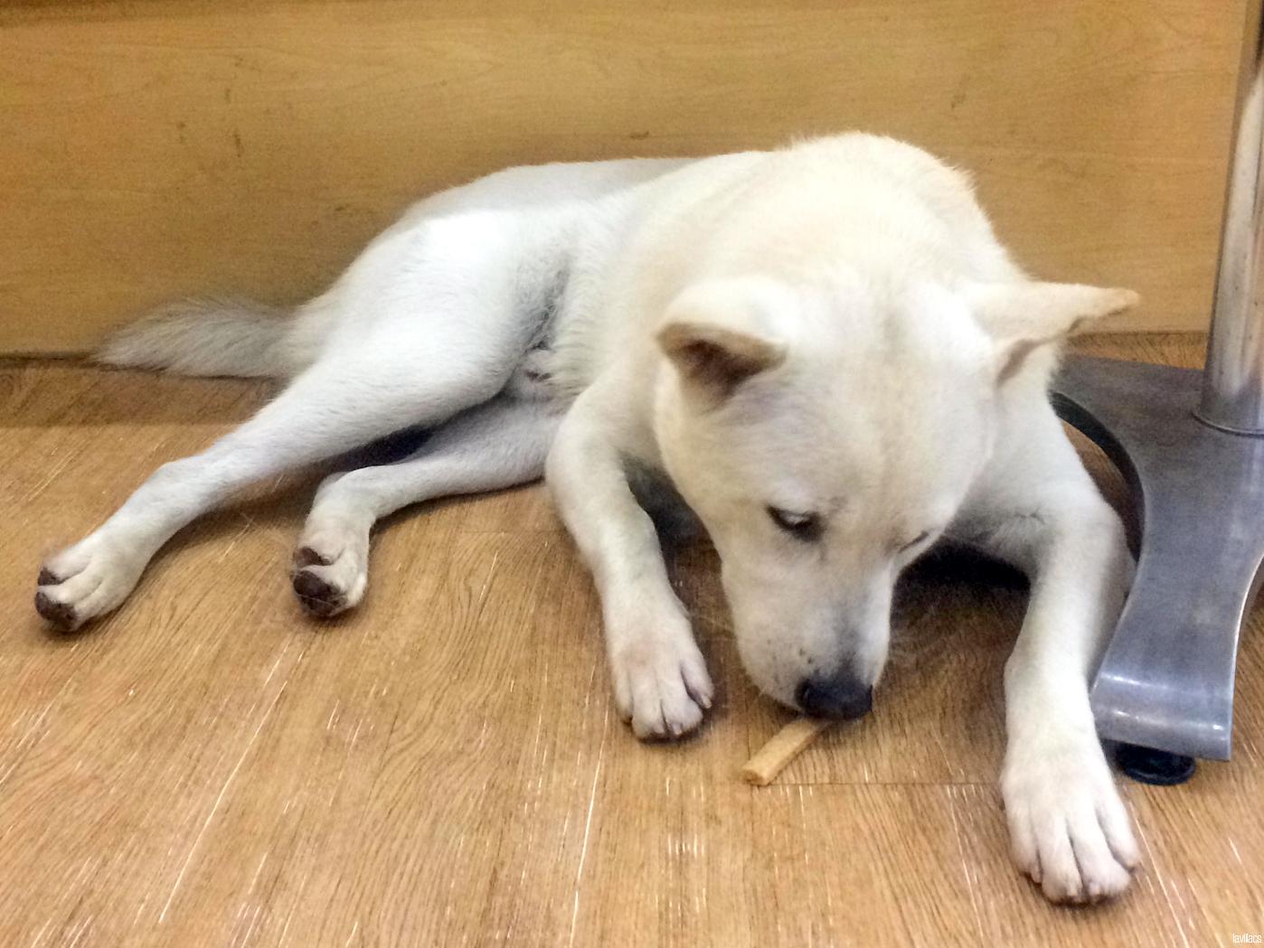 Seoul, Korea - Summer Study Abroad 2014 - Bauhaus Dog Cafe dog eating treats