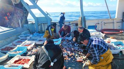 Pescaturismo Mallorca turistas trabajan con los pescadores
