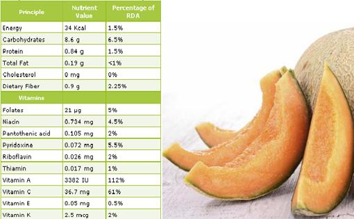 Kalori dalam Melon
