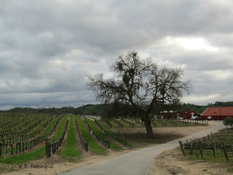 Photos  from the Rio Seco Vineyards and Tasting Room in Paso Robles