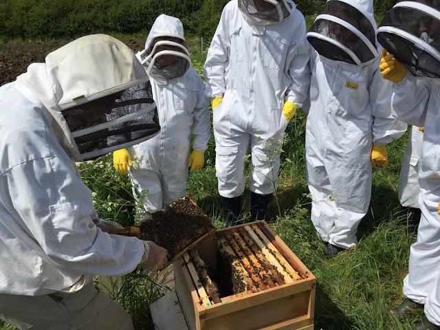 Νέα φορολογικά μέτρα που τελειώνουν τους μελισσοκόμους; Ένας αγανακτισμένος μελισσοκόμος...