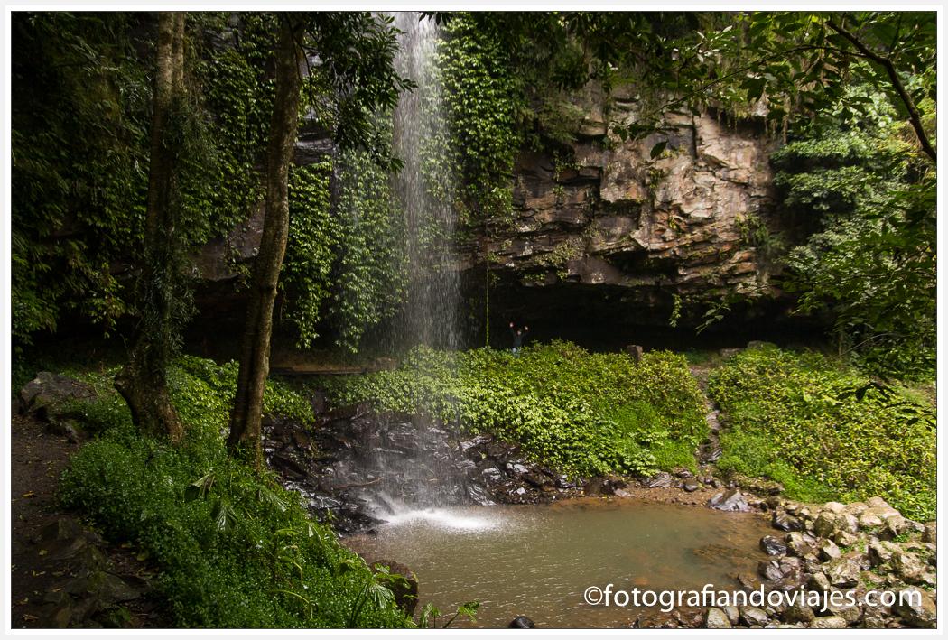 Cascada crystal shower en Dorrigo National Park