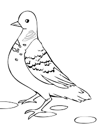 Baby Pigeon Coloring Pages Free Download