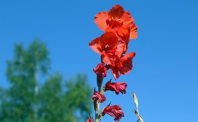 hoa dơn đẹp nhất 10