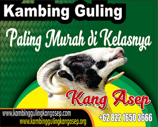 Pusat Kambing Guling Bandung