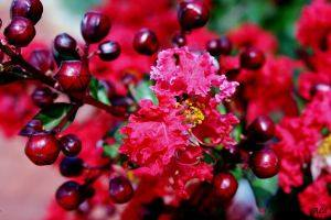 avis berry flirt galaxie parfumée, blog bougie, blog parfum, blog beauté