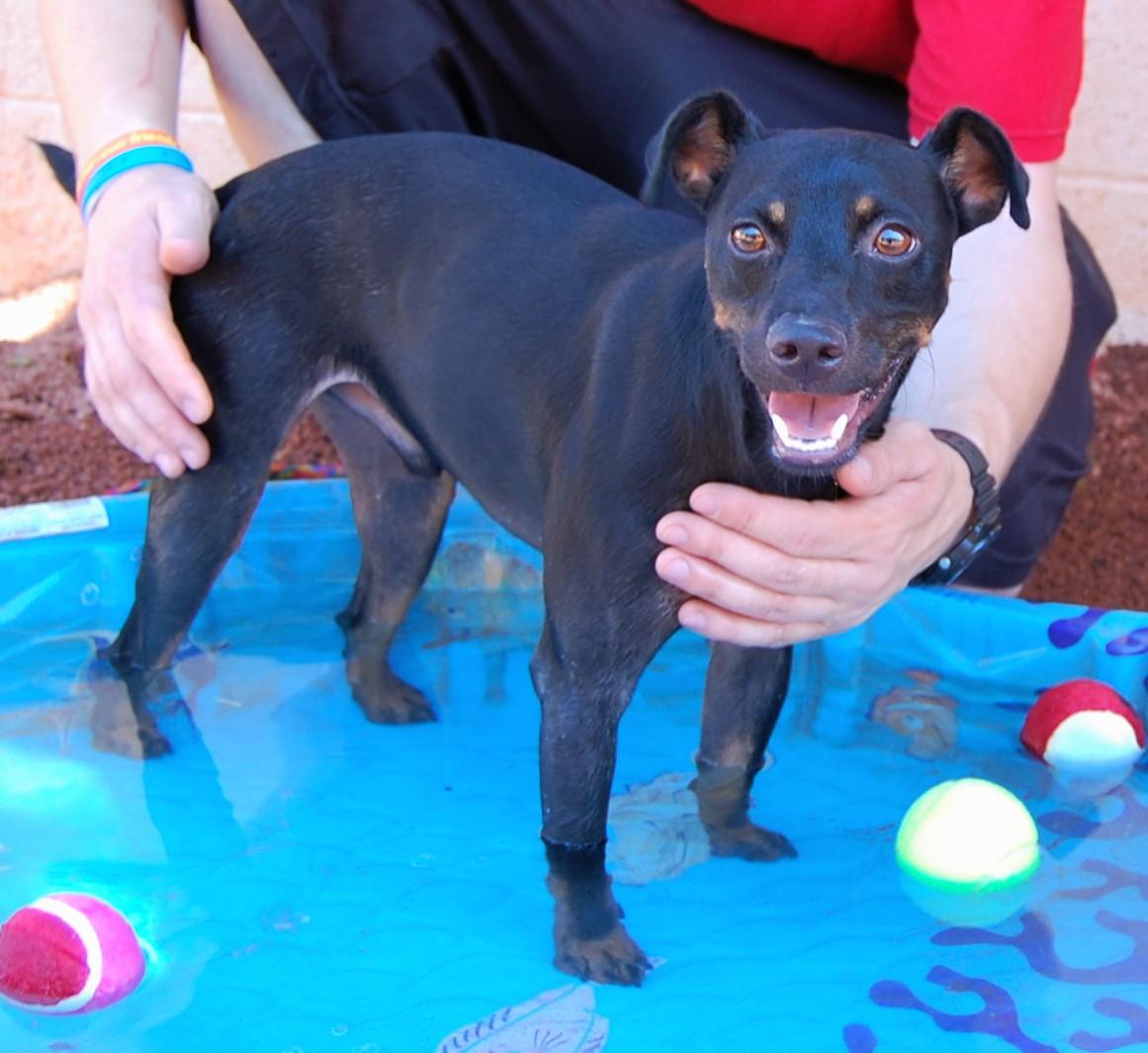 Las vegas animal shelter adoption for Dog pound las vegas nevada