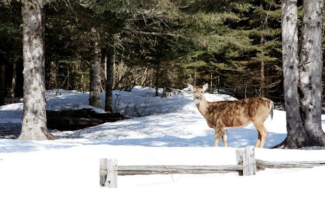 opieka nad dzikimi zwierzętami podczas zimy