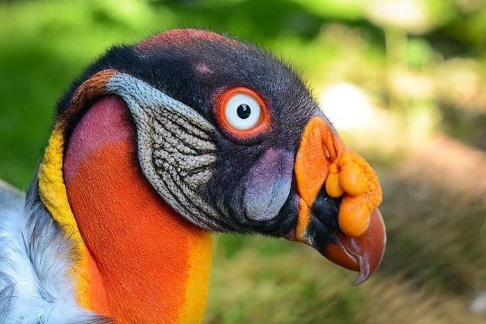 Inilah 10 Burung yang Lebih Mirip Alien Ketimbang Hewan