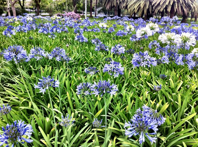 Parque do Ibirapuera  flor