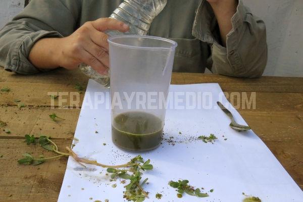 Para conservar el Extracto de Portulaca le agregamos Aceite de Girasol