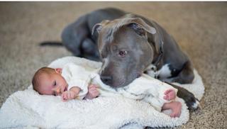 Όταν είπε στη γυναίκα του ότι πρέπει να δώσουν το pitbull, το σκυλάκι έκανε κάτι ΜΟΝΑΔΙΚΟ!