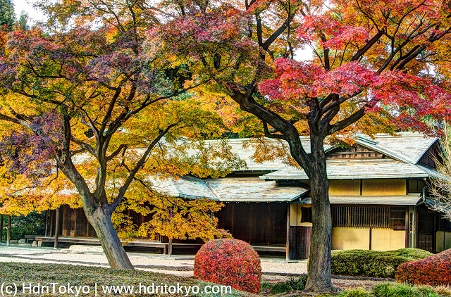 an old Japanese style architecture, Japanese maple trees with red and yellow leaves.