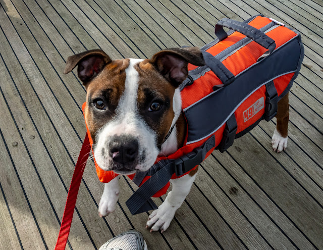 Photo of Ruby wearing her life jacket