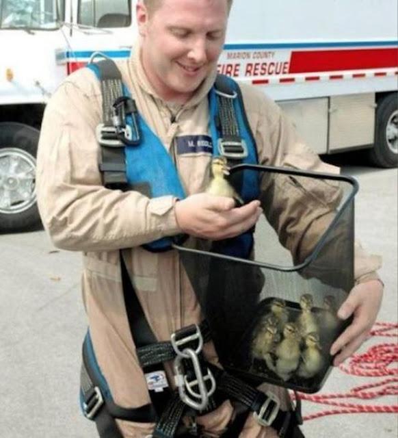 17 khoảnh khắc đầy xúc cảm của những người lính cứu hỏa và động vật