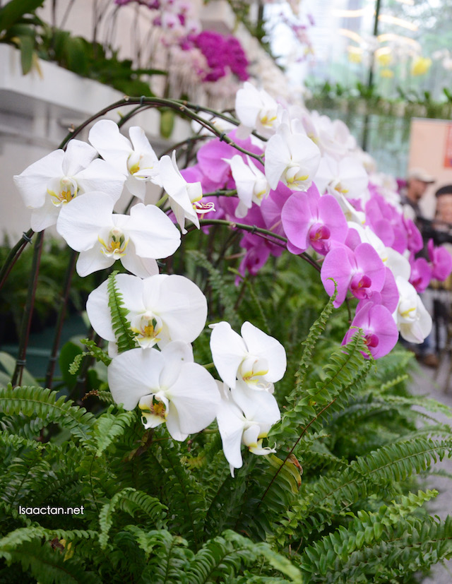 Beautiful flowers and orchids at The Orchid Conservatory, The Majestic Hotel Kuala Lumpur