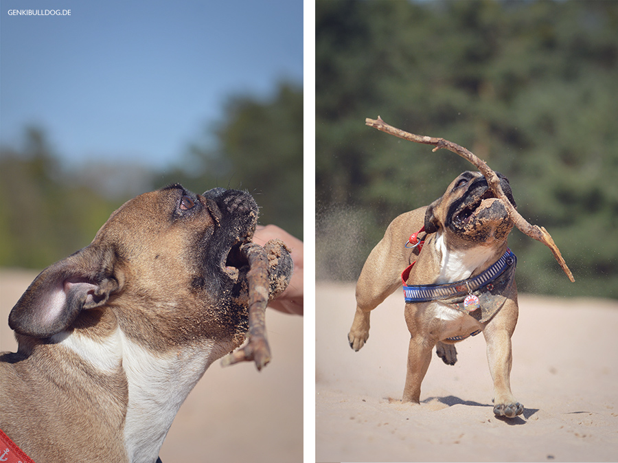 Hundeblog Genkibulldog - Mit Hund auf den Sanddünen im Stadtwald Speyer