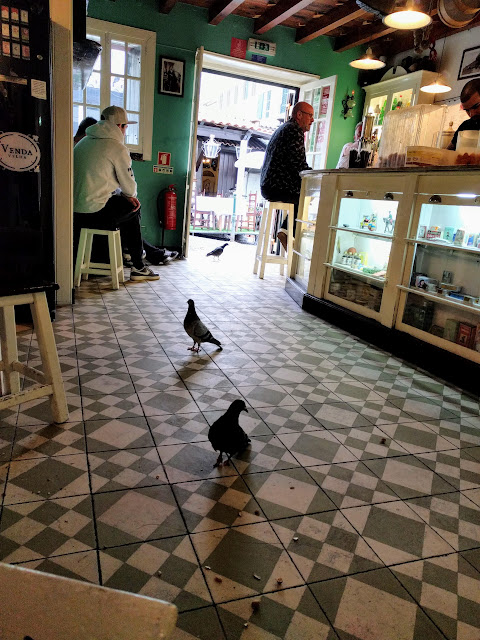 2 pigeons walk into a bar in Funchal, Madeira